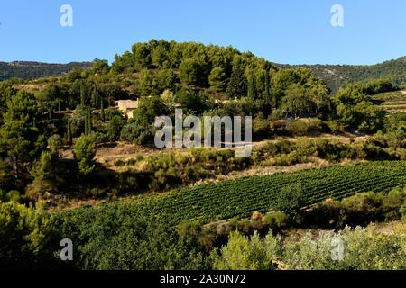 Vineyards in Provence. - Stock Photo