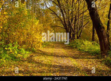 Alley in autumn Park. Trees with yellow foliage. - Stock Photo