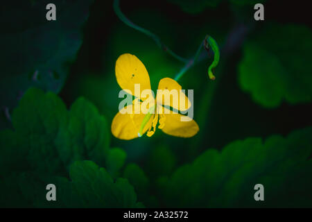 Yellow flower on green background - Stock Photo