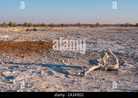 Rocky African Landscape with Bleached, White, Dried Wood in Etosha National Park, Namibia, Africa - Stock Photo