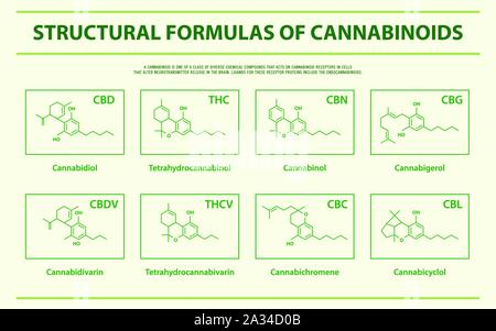 Structural Formulas of Main Natural Cannabinoids horizontal infographic illustration about cannabis as herbal medicine, healthcare and medical vector. - Stock Photo