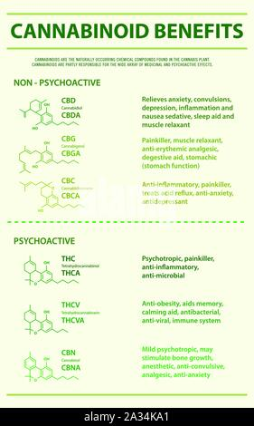 Cannabinoid Benefits vertical infographic illustration about cannabis as herbal alternative medicine, healthcare and medical science vector. - Stock Photo