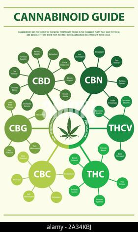 Cannabinoid Guide vertical infographic illustration about cannabis as herbal alternative medicine, healthcare and medical science vector. - Stock Photo