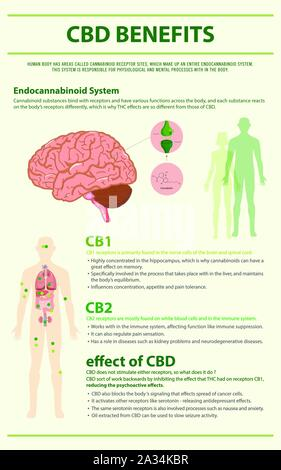 CBD Benefits Human vertical infographic illustration about cannabis as herbal alternative medicine, healthcare and medical science vector. - Stock Photo