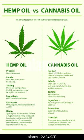 Hemp Oil vs Cannabis Oil vertical infographic illustration about cannabis as herbal alternative medicine, healthcare and medical science vector. - Stock Photo