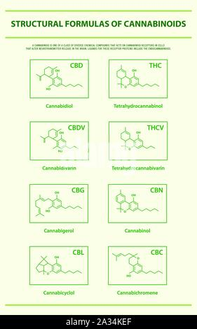 Structural Formulas of Main Natural Cannabinoids vertical infographic illustration about cannabis as herbal medicine, healthcare and medical science. - Stock Photo