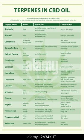 Terpenes in CBD Oil vertical infographic illustration about cannabis as herbal alternative medicine, healthcare and medical science vector. - Stock Photo