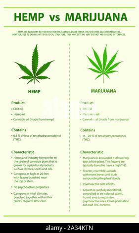 Hemp vs Marijuana vertical infographic illustration about cannabis as herbal alternative medicine, healthcare and medical science vector. - Stock Photo