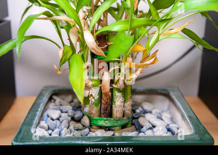 Hornsey, London UK 5th Oct.2019. House Plants and Orchids. - Stock Photo