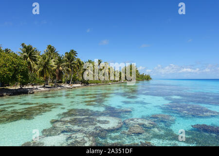 Palm trees line a sandy beach next to a tropical lagoon filled with coral under a bright blue sky