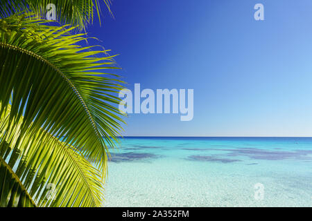 The leaves of a palm tree frame a turquoise lagoon surrounded by a bright clear blue sky with copy space