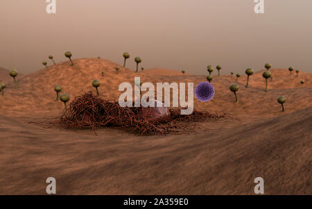 fungus on the leather surface, fungus releases spores, landscape of microworld, spore fallen on the leather surface - Stock Photo