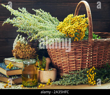 Fresh and dried wiild herbs: absinth wormwood plant, tansy, dried St. John's wort, cllover and mifoil, assorted on the wooden rustic table,closeup, co - Stock Photo