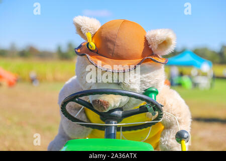 Cute bear driving the car - Image - Stock Photo