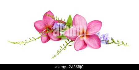 Red Frangipani flowers with leaves isolated on white - Stock Photo