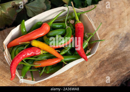 Red yellow and green organic hot peppers in wooden basket - Stock Photo