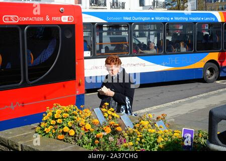 An single elderly lady standing next to a bus using a smart phone, on Worthing seafront Sussex England UK - Stock Photo