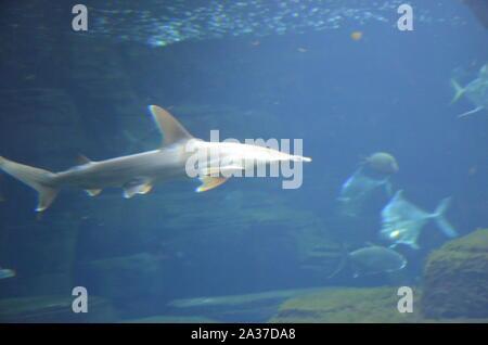 Shark in the aquarium of Berlin (Germany) - Stock Photo