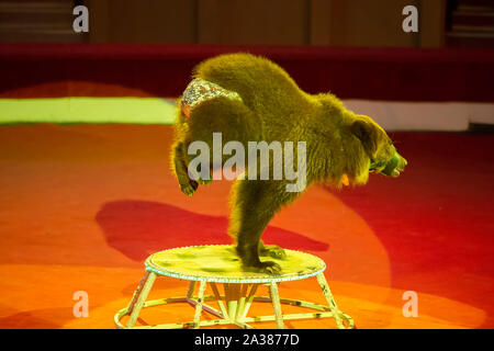animals in the circus - Stock Photo
