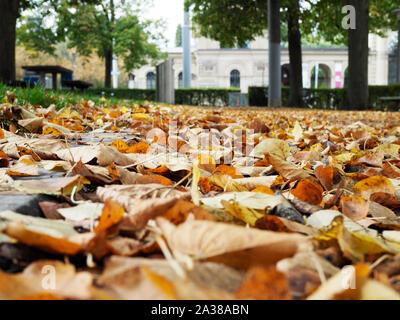 Laub auf dem Boden in einem Park in Zürich - Stock Photo
