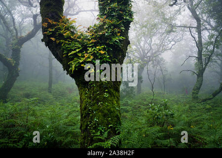 Close-up of a tree in the cloud forest, Tarifa, Cadiz, Andalusia, Spain - Stock Photo