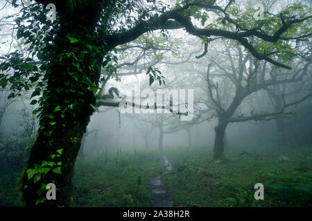 Trees in the Cloud forest, Tarifa, Cadiz, Andalusia, Spain - Stock Photo