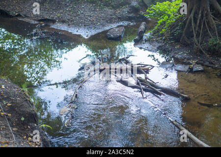 the  water of a river runs right through an old forest - Stock Photo