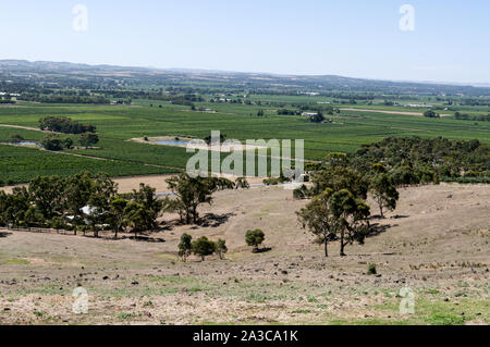 A panoramic view of thousands of acres of vines in the Barossa Valley wine region in South Australia.   There are about 150 wineries in the Barossa Va - Stock Photo