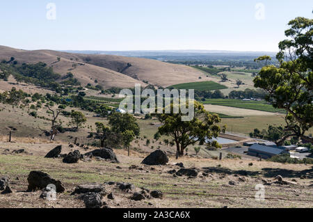 A panoramic view of thousands of acres of vines from Mengler Hill Lookout in the Barossa Valley wine region in South Australia.   There are about 150 - Stock Photo