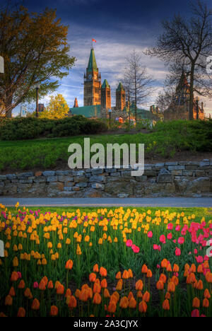 Beautiful Tulips with Canadian Parliament in Ottawa Canada - Stock Photo