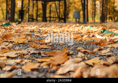 Autumn sunny landscape. The road in the park leads to the gazebo. Autumn park of trees and fallen autumn leaves on the ground in the park on a sunny O - Stock Photo