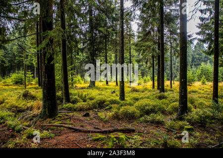High Fens Eifel Nature Park, Wallonia, Belgium, west of Baraque Michel, - Stock Photo