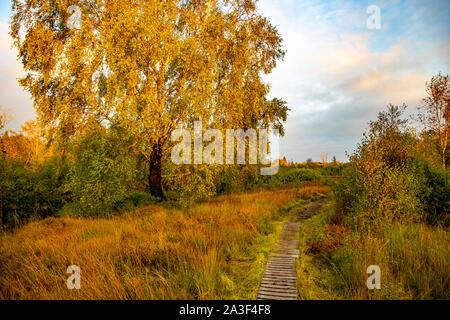 Naturpark Hohes Venn-Eifel, Wallonie, Belgien, Naturschutzgebiet Brackvenn, Wanderweg auf Holzstegen, - Stock Photo