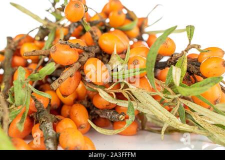 Lot of whole fresh ripe orange sea buckthorn berry isolated on white background - Stock Photo