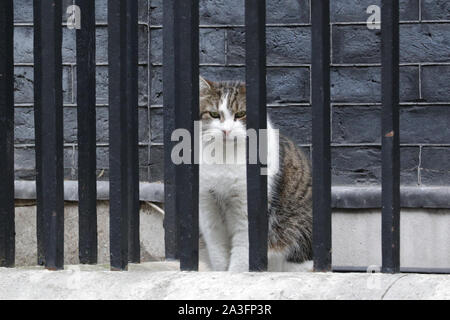 Downing Street, Westminster London, UK. 08th Oct, 2019. Larry the cat looks like he's been put behind bars today. Ministers attend the weekly government Cabinet Meeting in Downing Street this morning. Credit: Imageplotter/Alamy Live News - Stock Photo