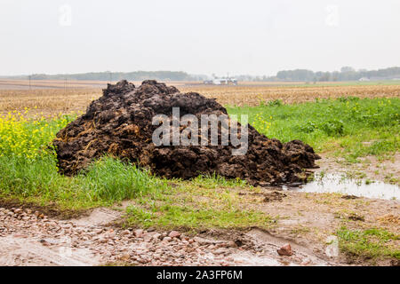 Fertilizer from cow manure and straw. A pile of manure black color lies on the edge of the field. Milk farm. Podlasie, Poland. - Stock Photo