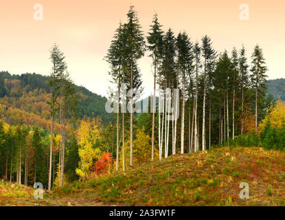 colorful autumn landscape in the forest on the Tuscan mountains in Italy - Stock Photo