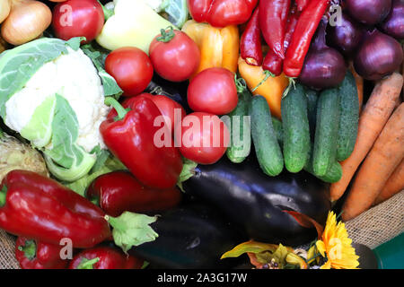 Various freshly picked  harvested vegetables in basket as a background. Autumn foods products as a background. Healthy organic harvest vegetables and - Stock Photo