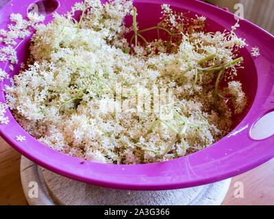 Elderflowers in the sieve - Stock Photo