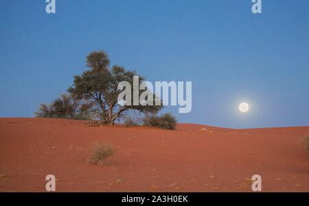 Namibia, Hardap province, Bagatelle Kalahari reserve, dunes under moonlight - Stock Photo