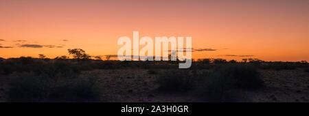 Namibia, Hardap province, Bagatelle Kalahari reserve, sunset over savanna - Stock Photo