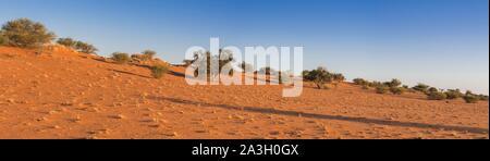 Namibia, Hardap province, Bagatelle Kalahari reserve, dune and savanna - Stock Photo