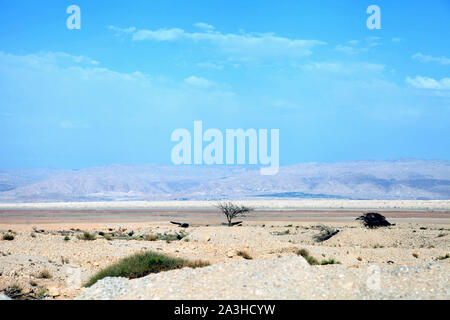 lonely bush at the desert. View on the desert landscape in Israil. Dead sea area.