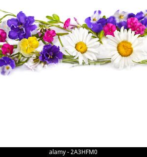 Floral ornament. Chamomile and Violet isolated on white background. Flat lay, top view. Free space for text. - Stock Photo