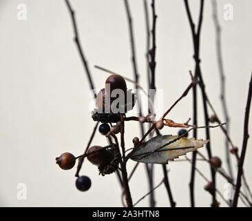 Decorative oak tree nuts and a leaf among twigs. - Stock Photo