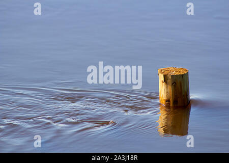Fence post in floodwater, River Aire,  North Yorkshire, England, UK, GB - Stock Photo