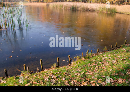 autumn lake, pond and grass photo. Beautiful picture, background, wallpaper - Stock Photo