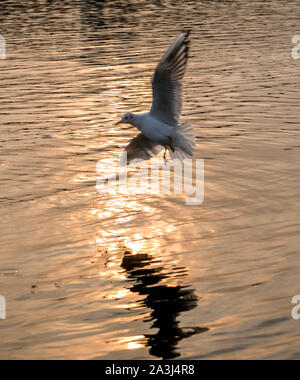 gull over the water - Stock Photo