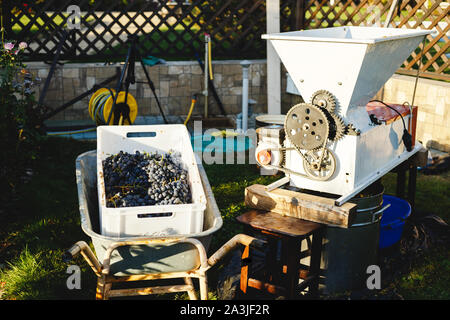 Automatic destemmer crusher machine. Small business concept. Wine Making process. Homemade wine. - Stock Photo