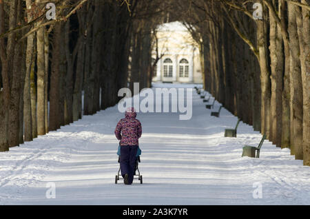 Unidentified woman with her back to the viewer in the distance walks with a pram in a winter park under the shade of large trees - Stock Photo